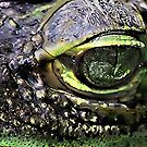 She's got Green Eyes by Colleen Rohrbaugh