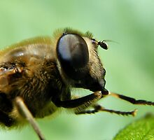 Hoverfly... by Yool