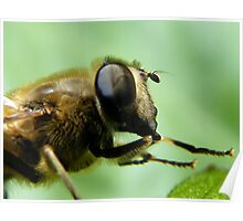 Hoverfly... Poster