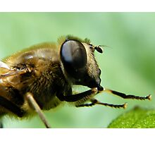 Hoverfly... Photographic Print