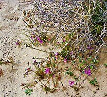 Desert Spring by Mike Pesseackey (crimsontideguy)