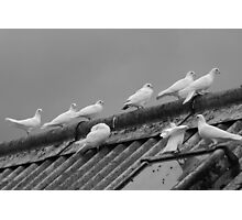 doves on rooftop, b&w Photographic Print