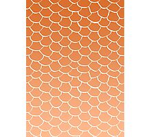 Orange Scales Photographic Print