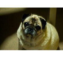 Puggy Love Photographic Print