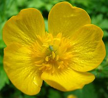 buttercup and aphid by purpleminx