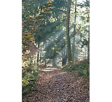 woodland sunlight Photographic Print
