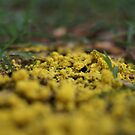 Yellow Fungus  by Jeff Stroud