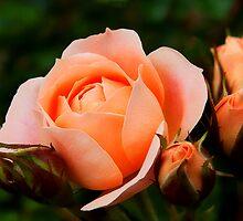 Just Peachy by Susie Peek