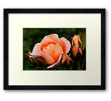 Just Peachy Framed Print