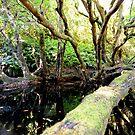 """"""" Upper Bemm River East Gippsland """" by helmutk"""