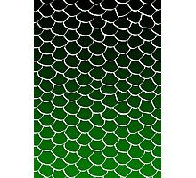 Green and Black Scales Photographic Print