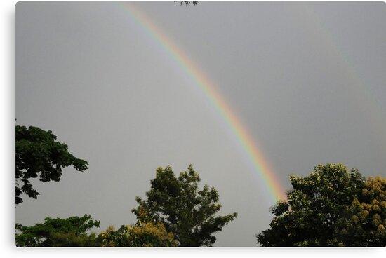 Rainbow by AravindTeki