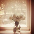 roses in the window by Angel Warda
