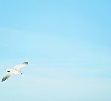 Soaring Seagull by adoredcreation
