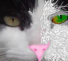 Digital Cat by Sandra Cockayne