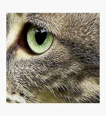 C Is For Cat With SeaGreen Eyes Photographic Print
