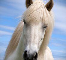 white beauty by Mitch  McFarlane