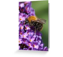 The brown bumblebee Greeting Card