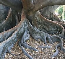 My Enormous Roots by shazart