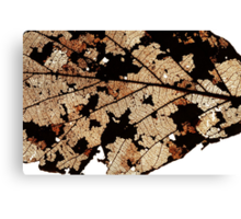 Dead Dry  leaf Canvas Print