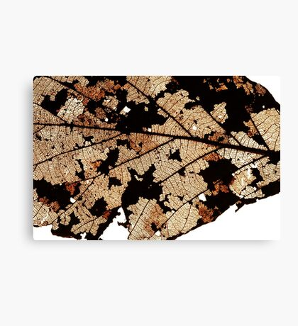Dead Dry  leaf Canvas Print