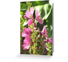 Pink Flowers II Greeting Card