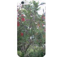 bottle brush tree iPhone Case/Skin