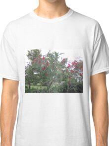 bottle brush tree Classic T-Shirt