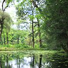 Reflections in a Woodland Pool by CMCetra
