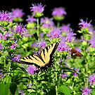 Yellow and Black Butterfly by CMCetra