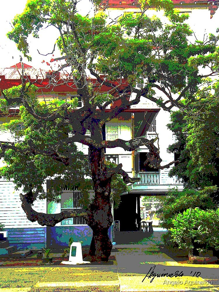 An Old Chico Tree by Angelo Aguinaldo