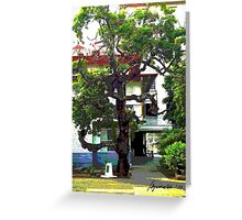An Old Chico Tree Greeting Card