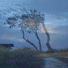 Morning tree by Virginia McGowan