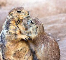 Prairie Dog Love by Sue  Cullumber