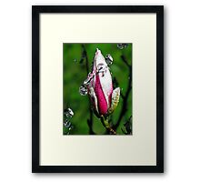 """Magnolia~Water"" Framed Print"