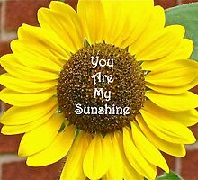 You Are My Sunshine by FotiniTaylor