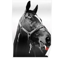 Animals: Horse making face Poster