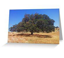 Oak in San Diego Hills Greeting Card