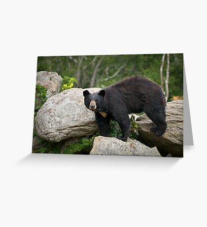 American Black Bear in Blue Ridge Mountains Greeting Card