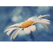 Hazy Daisy Photographic Print