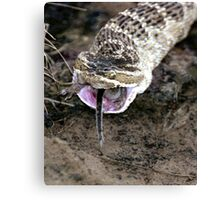 Rattlesnake with mousetail Canvas Print