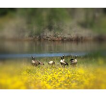 Geese in a Blur Photographic Print