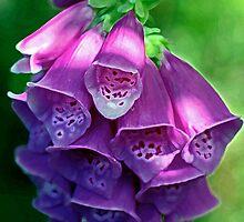 Foxglove by OpalFire
