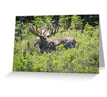 Smiling Bull Moose Greeting Card