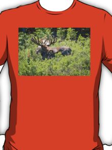 Smiling Bull Moose T-Shirt