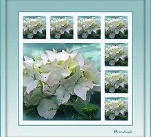 ~ White Hydrangea ~ by Brenda Boisvert