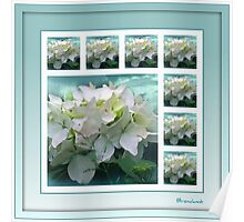 ~ White Hydrangea ~ Poster