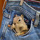 Pocket Full of Chippy by Betsy  Seeton