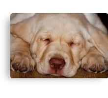 Puppy Nap Canvas Print