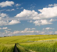 Wheat Field in Summer Light by danielhenderson